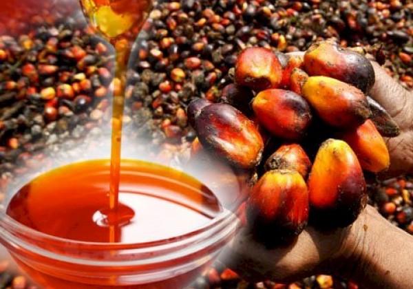 Aký dopad má palmový olej na životné prostredie? Odpoveď vás prekvapí!