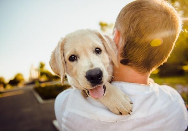 Rozumiete reči vášho psieho kamaráta?