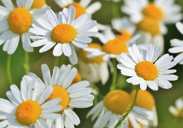 7 byliniek, ktoré si poradia s bodnutím hmyzu