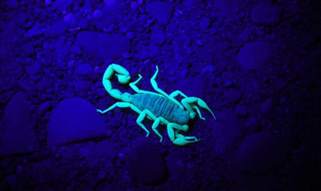 Ste Škorpión, alebo máte nejakého vo svojom okolí? Prečítajte si o tomto znamení viac.